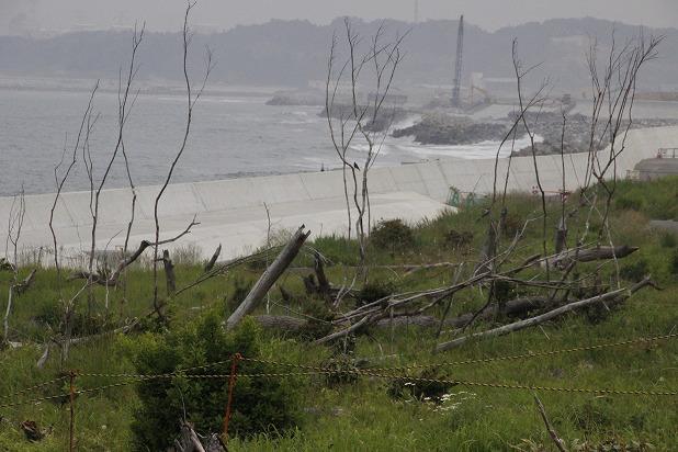 12海岸周辺には若い樹木も育ち始めました