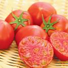 kashiwa_tomato_eye