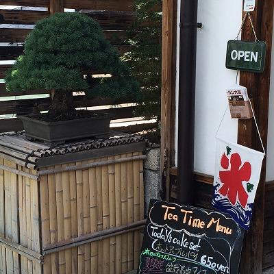 お店の入口の盆栽
