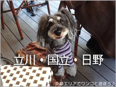 店内ワンコ同伴OKの店(立川・国立・日野)