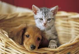 犬猫images