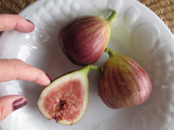 1610_fig
