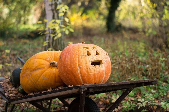 autumn-1031947_640
