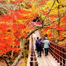 オトナ旅~人気のバスツアー・おトクな宿泊プランなど