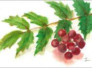 基礎から学ぶ「日本画教室」  四季折々の草花や実ものを描く