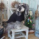 【福生】フォトジェニックな小型犬用ドッグラン♪「DOG SMALL GARDEN koniwan(こにわん)」