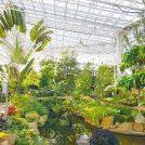 【神代植物公園】冬でもぽっかぽか! 植物公園で南国気分