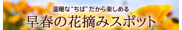 """温暖な""""ちば""""だから楽しめる「早春の花摘みスポット」"""