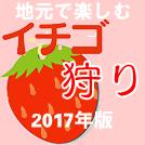 【特集】今年は地元の農園で、気軽に「イチゴ狩り」を♪