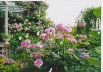 web_0418花のある暮らし
