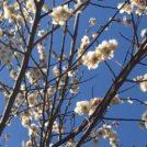 春を探しに、くさぶえの道散歩