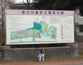 都立 小金井公園(ドッグラン)