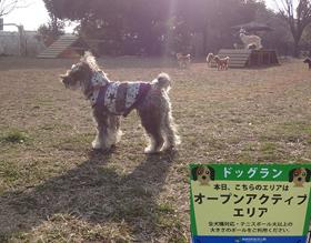 昭和記念公園(ドッグラン)