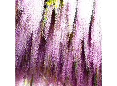 「あしかがフラワーパーク」で究極の春を満喫☆