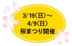 3/19(日)~4/9(日)桜まつり開催