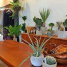 お部屋にしか見えない! 大宮・一の宮通り、植物と小物と古着の店「tokiwa」