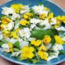 豊橋名産!食べられるお花「エディブルフラワー」とは