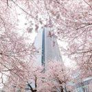 TokyoMidtown011