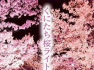 くにたち桜ライトアップ