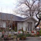 今しかない! 樹齢百年の桜寄り添うカフェガーデン、北区「プレリュード」