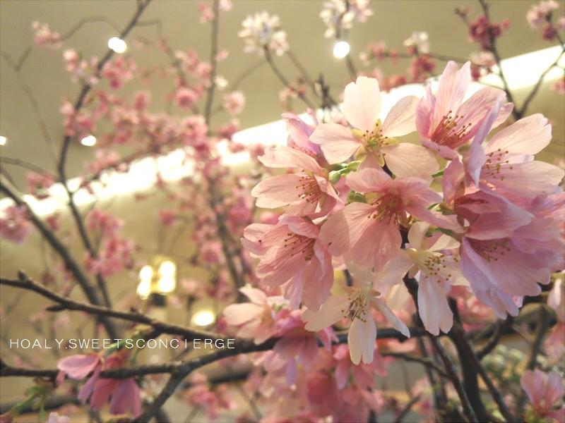 甘~い桜満開 スイーツの森でお花見