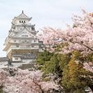 こころ踊る春を楽しんで【桜ガイド 兵庫】
