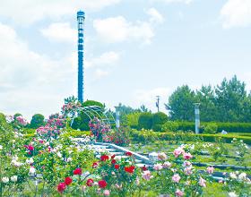 横浜・八景島シーパラダイス バラ園