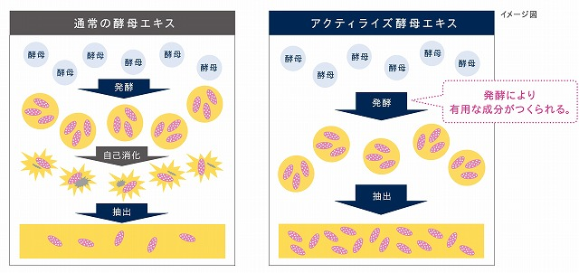 ★アクティライズ酵母エキス イメージ図
