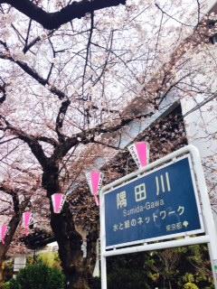 【隅田川】花のお江戸!墨堤は桜の名所! 屋形船も大人気
