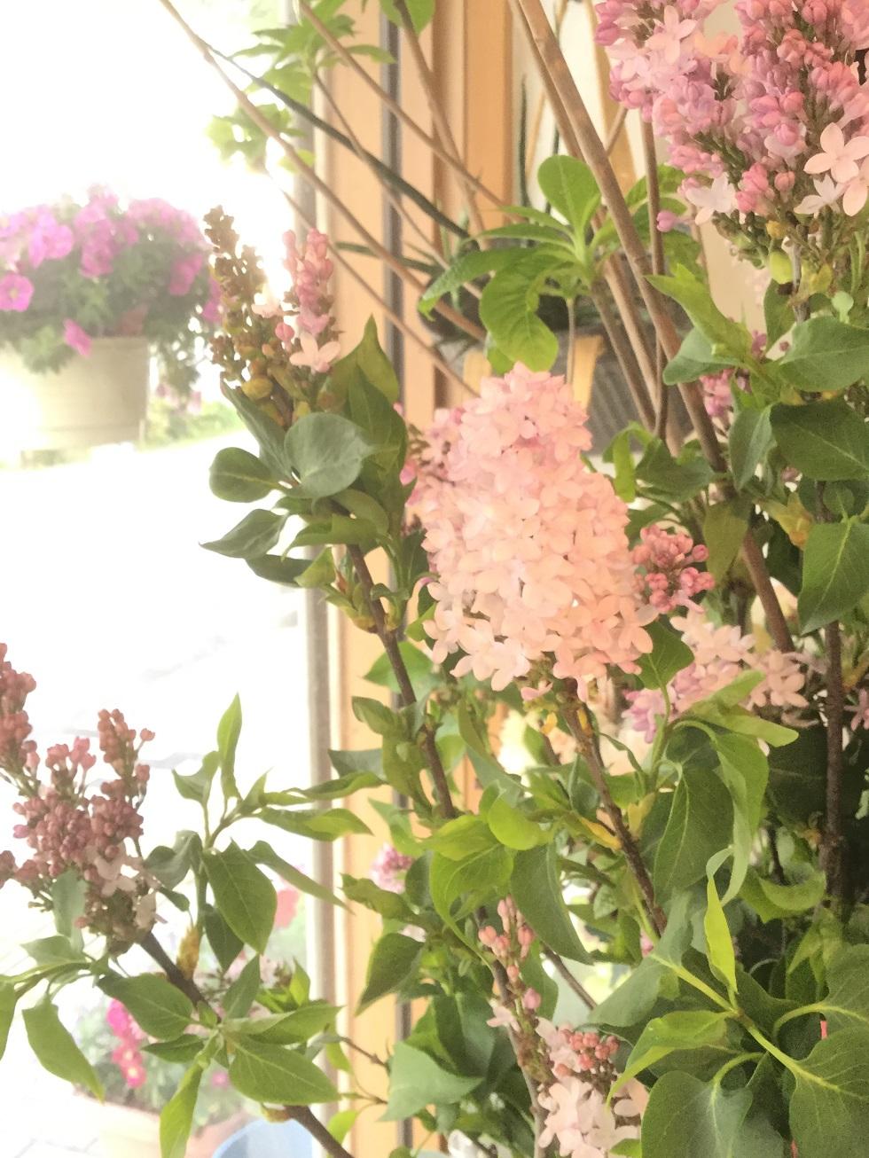 香りに癒される天然アロマ【ライラック】は今が旬!
