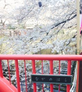 【目黒川】行って来ました!都内お花見ランキング第1位