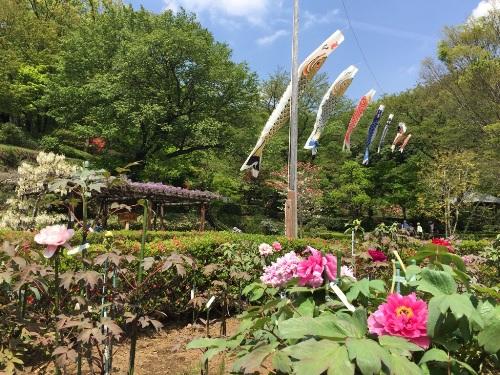 町田ぼたん園