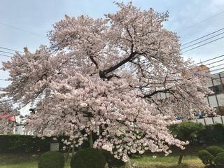 mac_sagajo8