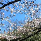 大倉山公園2