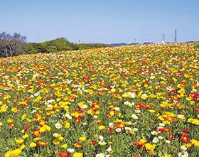 osk_170406_flowergarden02