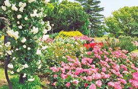osk_170406_flowergarden06