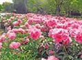 osk_170406_flowergarden13