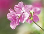 osk_170406_flowergarden20