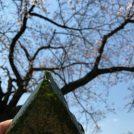 子連れベビーカーOK!高津区の人気お花見・お散歩スポット〜緑ヶ丘霊園〜