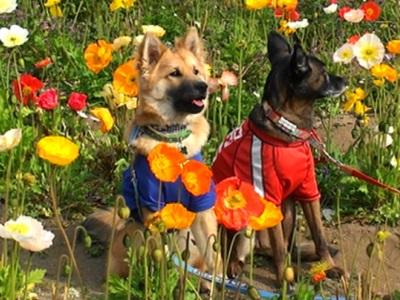 春爛漫の白浜フラワーパークでペットも一緒にお花摘み!!