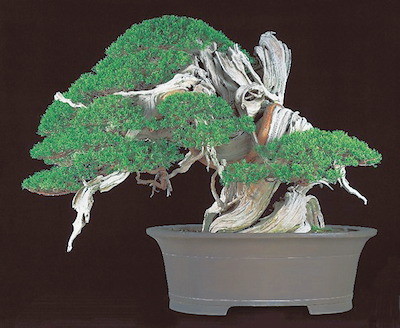 stm170420bonsai01