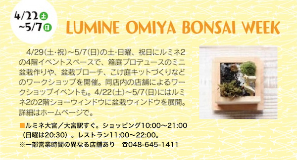 stm170420bonsai082