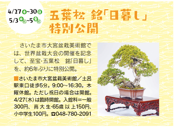stm170420bonsai10-01
