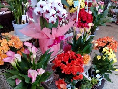 【岸根公園】お花や植物の事なら「園芸いちかわ」にお任せ!