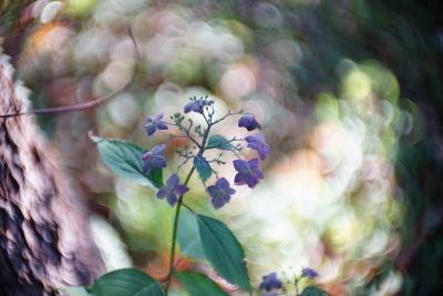 遠山 勉さん「神無月の紫陽花」