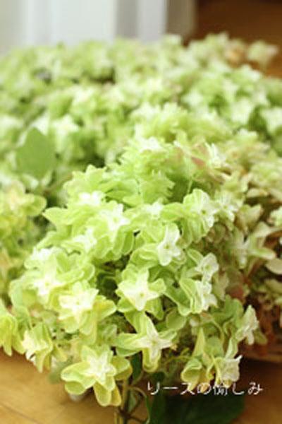2017.7 kashiwaba green