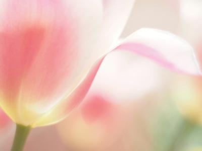 良知 英世さん「春」