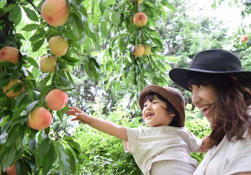 山梨市で桃狩り・ぶどう狩り