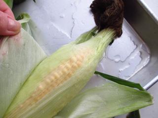 1707_cornboil