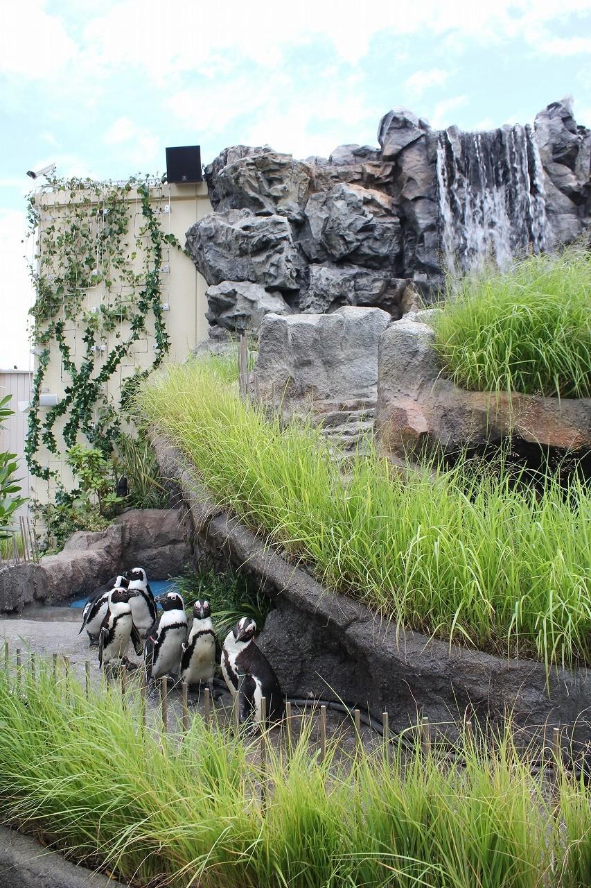 サンシャイン水族館4
